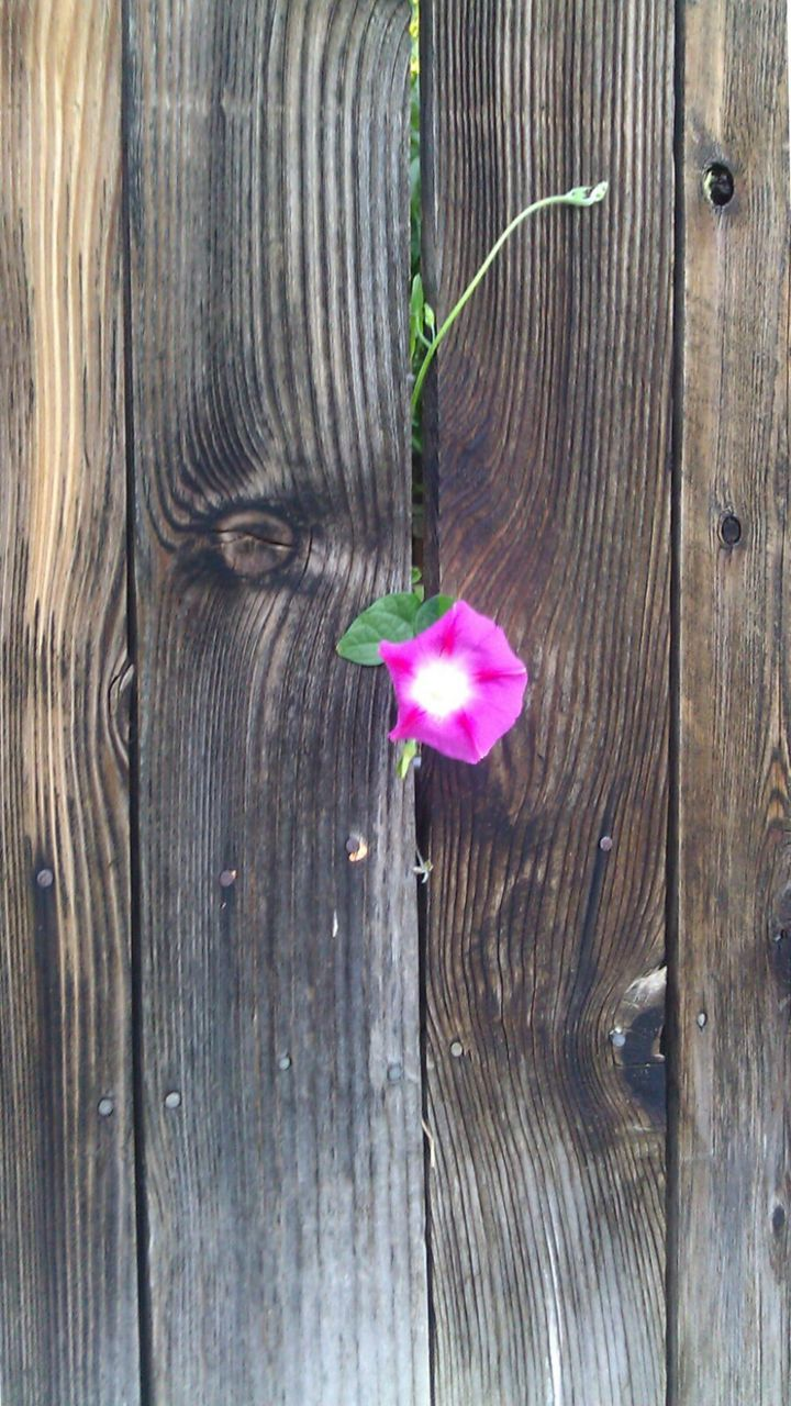 wood - material, flower, nature, plant, growth, no people, close-up, outdoors, fragility, blooming, freshness, day