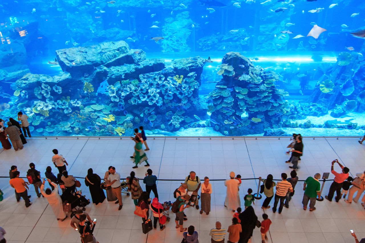 large group of people, aquarium, real people, leisure activity, fish, men, large group of animals, women, indoors, lifestyles, sea life, water, vacations, travel destinations, day, nature, people