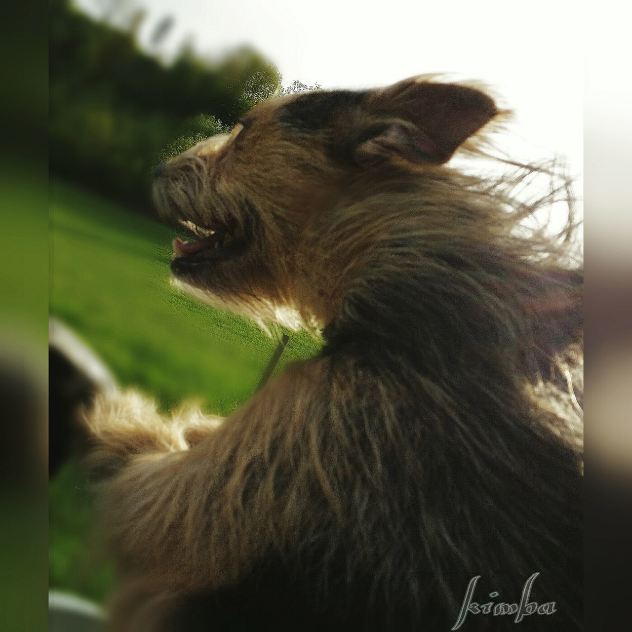 animal themes, one animal, domestic animals, mammal, pets, no people, focus on foreground, day, dog, outdoors, close-up