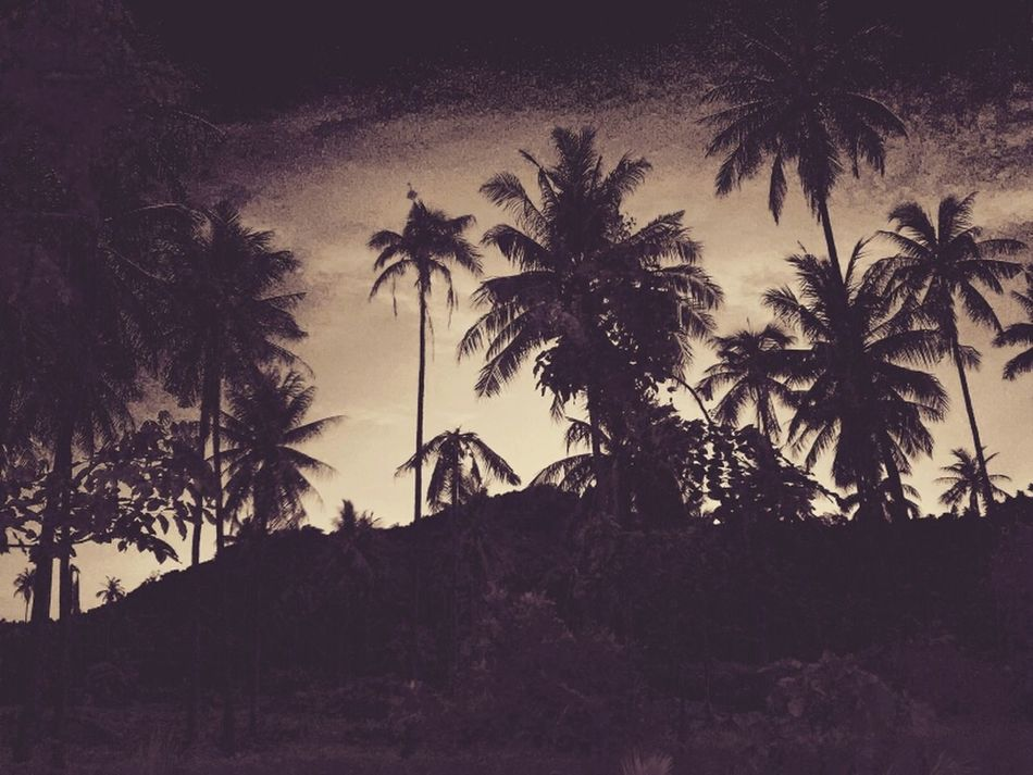Jungle Coconut Trees Traveling In Thailand Kus In Thailand