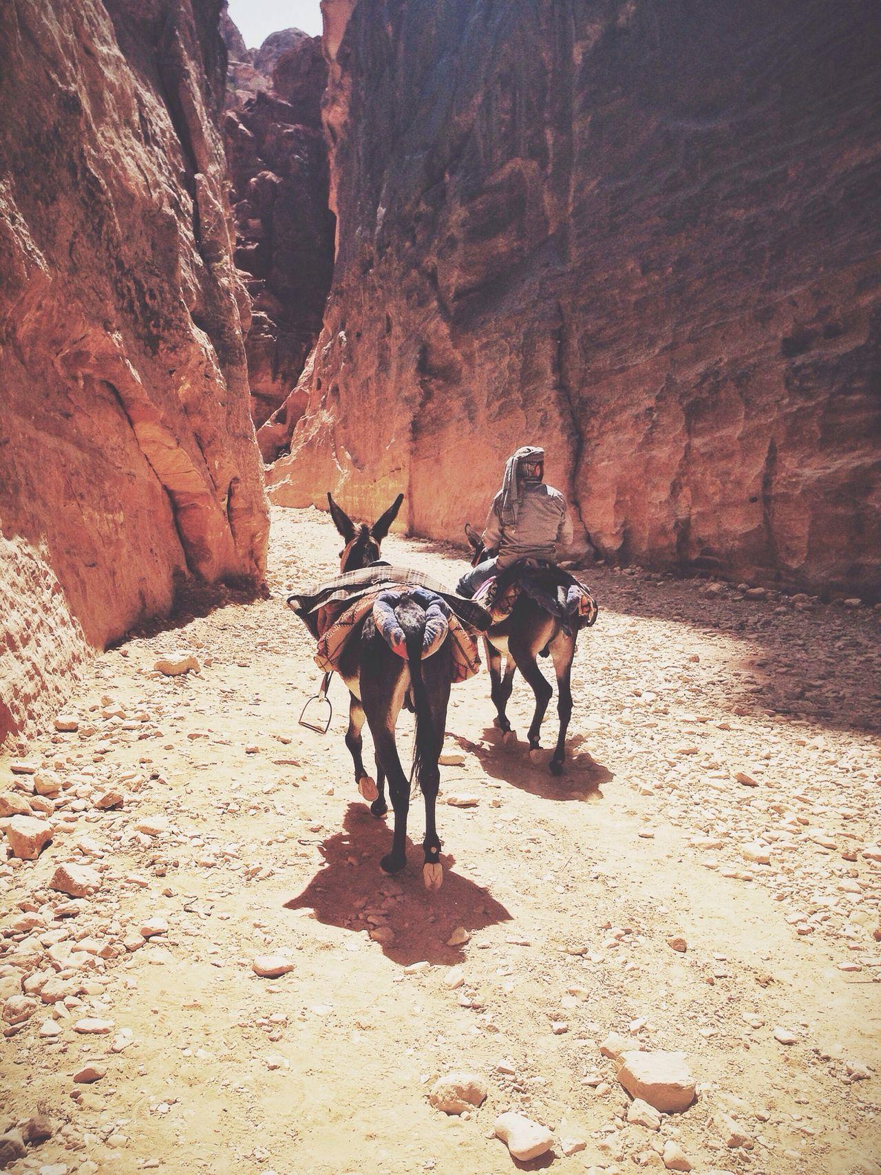 Jordan Petra Donkey Bedouin
