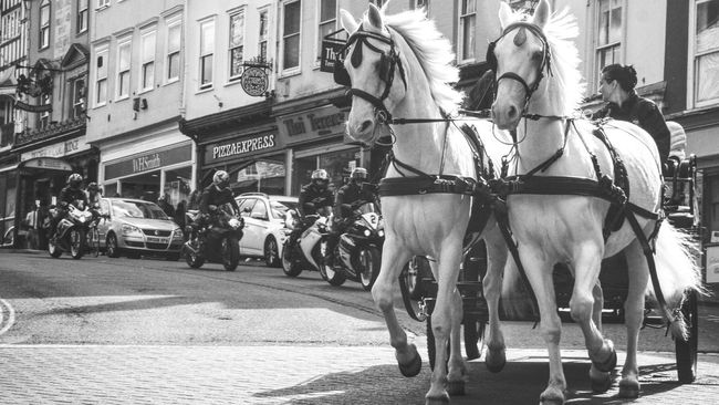 leading the horse power race Animal Themes Horse Horse Cart Horsedrawn Street Working Animal Horse Power Horses Horse Photography  EyeEm Team Eyeem Market EyeEm Best Edits EyeEm Gallery Popular EyeEmBestPics Blackandwhite Popular Photos Outdoors London Lifestyle Carriage City Motorbike