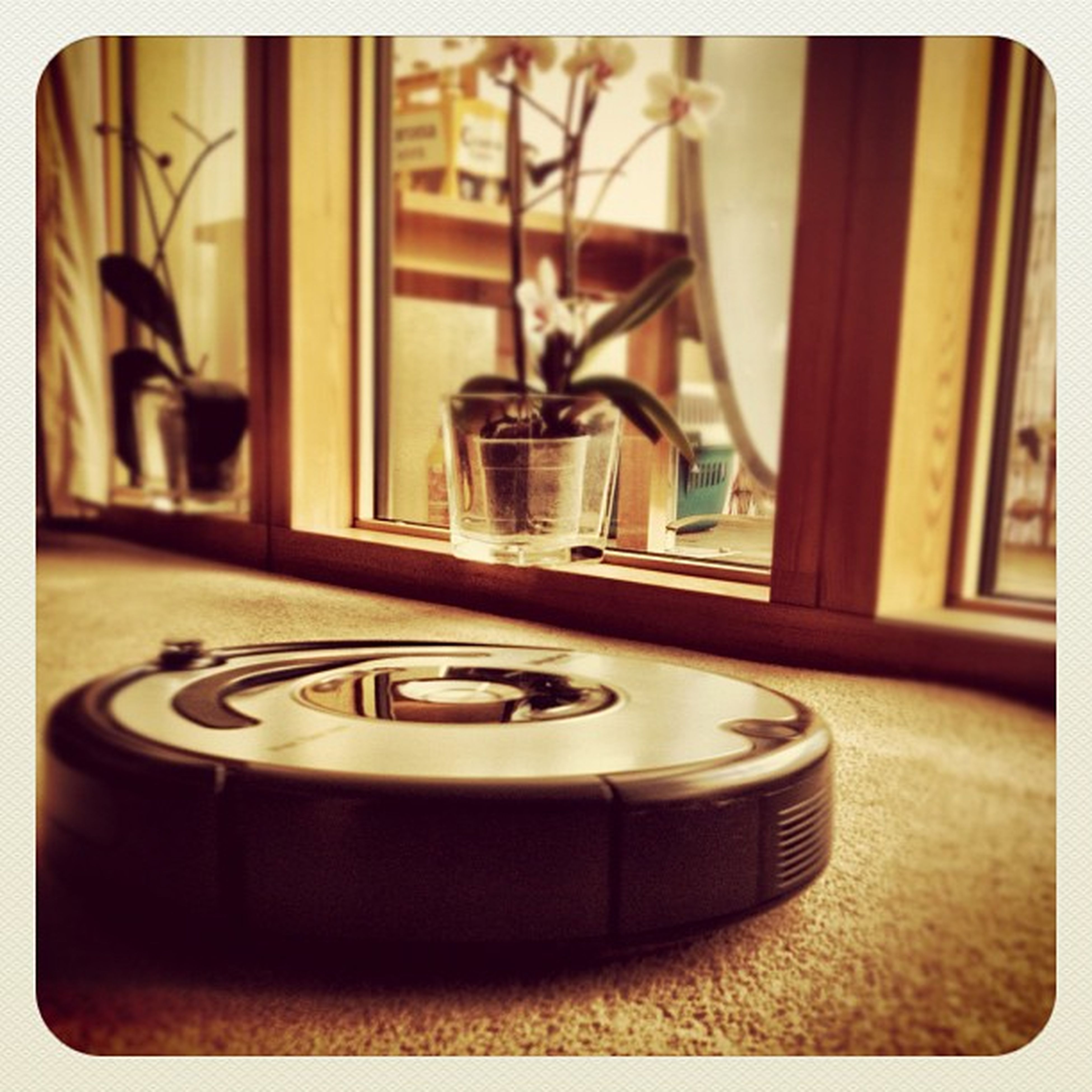 Morning Jammin' ? iRobot #roomba #hoover #ireland #earlybirdlove #gf_ire #ebstyles_gf #jj_forum #jj Ireland Hoover Jj  Earlybirdlove Jj_forum Ebstyles_gf Gf_ire Roomba