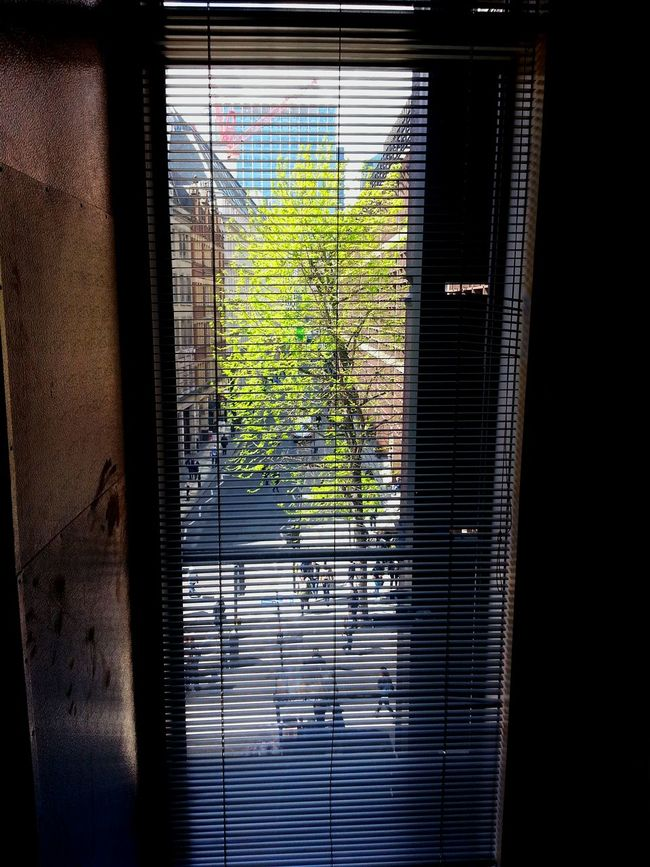 Outside Photography Urbannature UrbanNatured Springoutside Atwork Tree_collection  Window View Windowportal OutsideIsFree