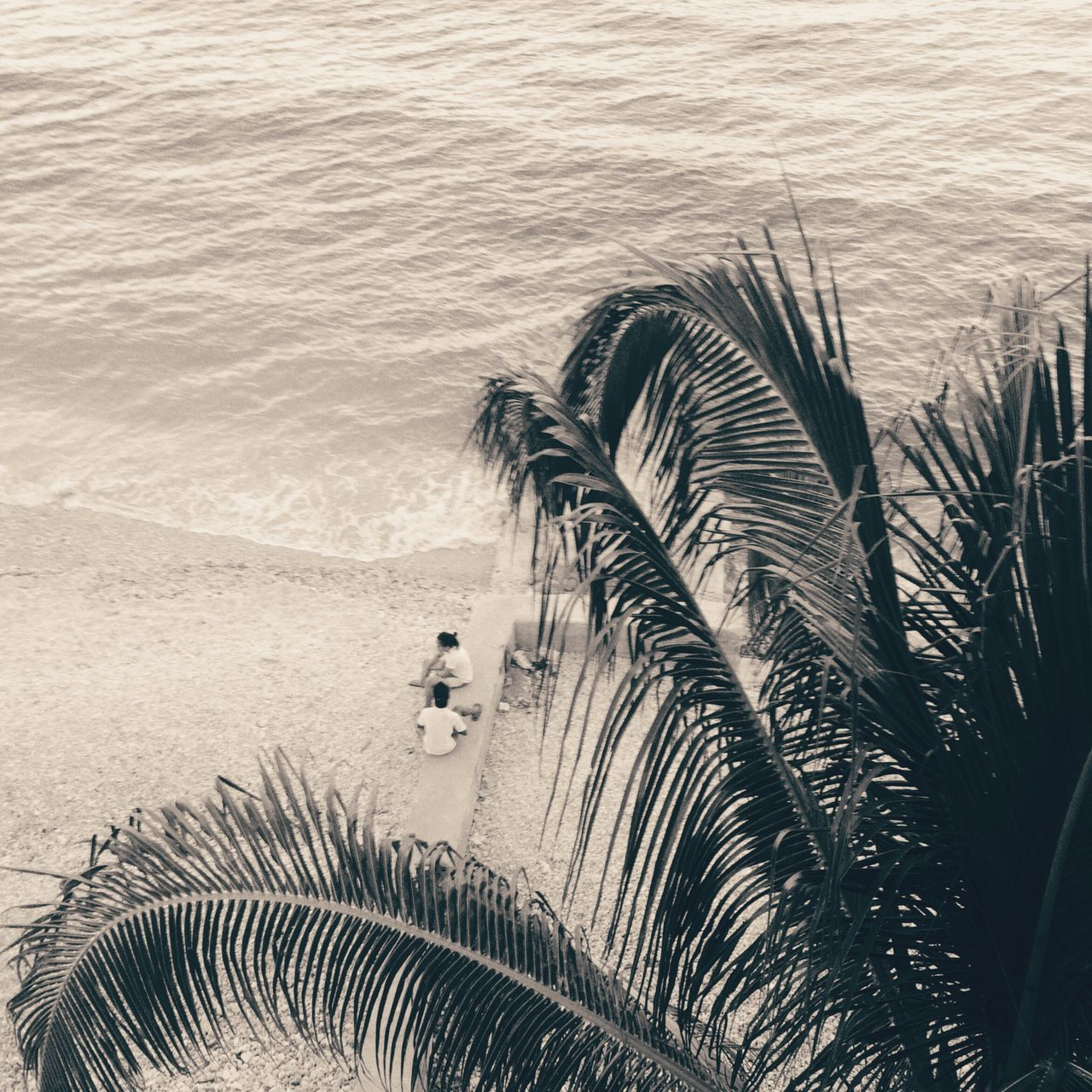 Boljoon Itsmorefuninthephilippines Cebu Island Island Life People Watching Sea Sepia Palm Tree Palm Tree Leaves Palm