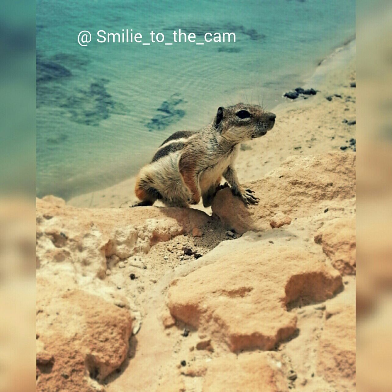 one animal, animal themes, rock - object, animals in the wild, no people, nature, day, sand, beach, outdoors, animal wildlife, mammal, close-up