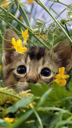 Eyem Cute Cats Cute Cats