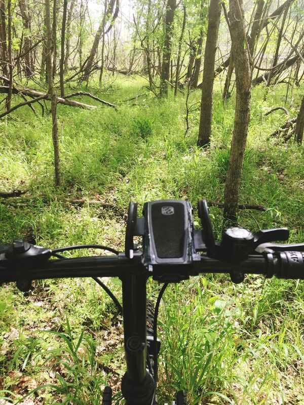 Deep Woods Biking Alone Forest Green Green Green!