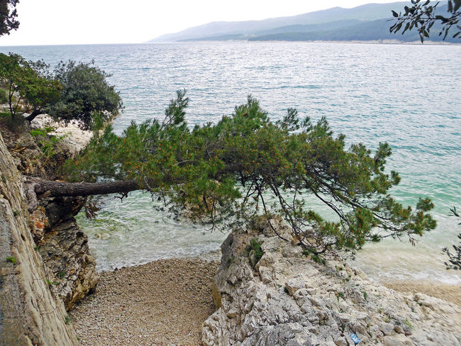 Rabac,Adriatic coast,Croatia,Europe,by the springtime,1 Adriatic Coast Adriatic Sea Beach Beauty In Nature Branch Croatia Eu Europe Freshness Holydays Idyllic Nature Plant Rabac Scenics Sea Springtime Tourism Tranquil Scene Travel Destinations Tree Vacations