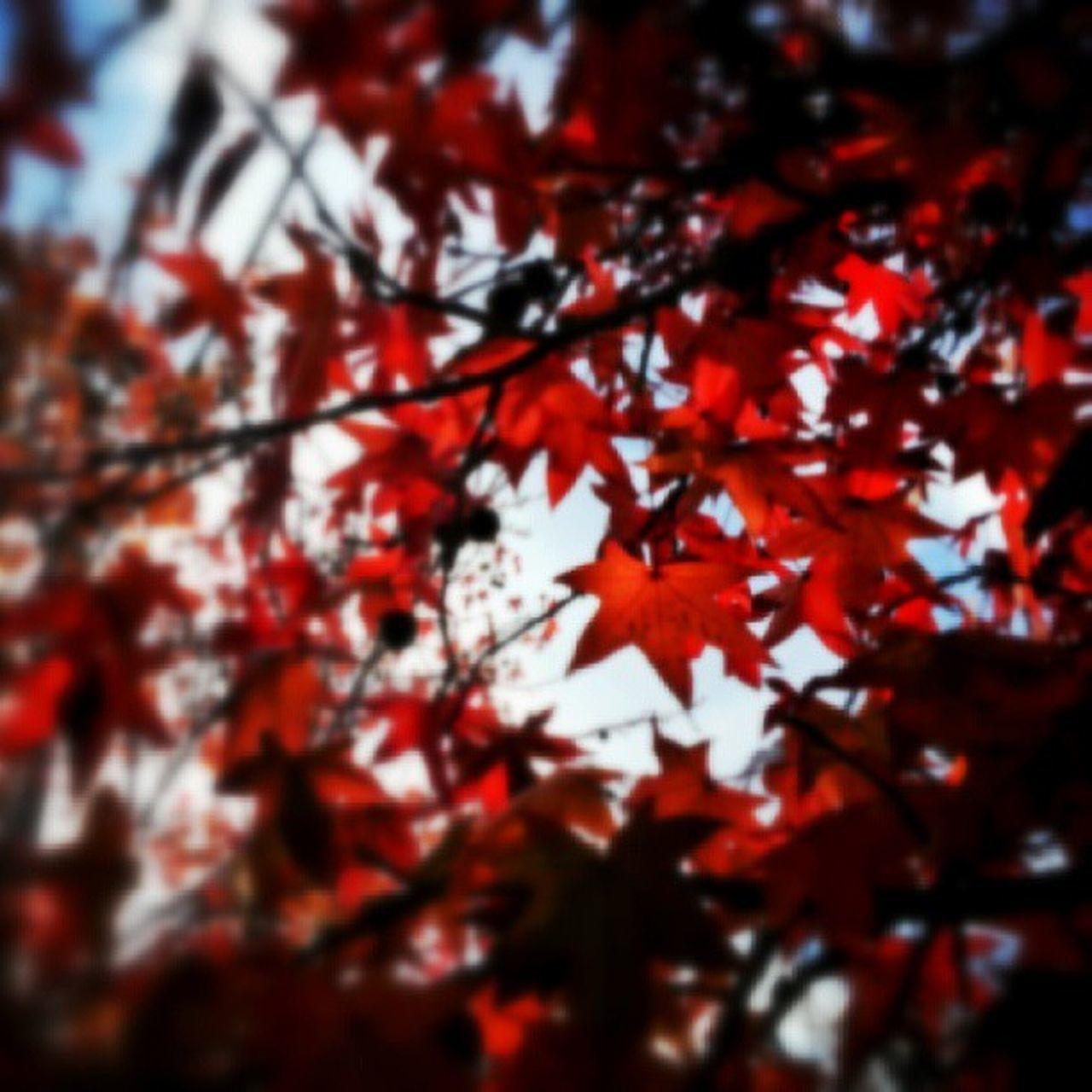 Igersbsas Bsassinfoco Red Otoño Nature Naturaleza