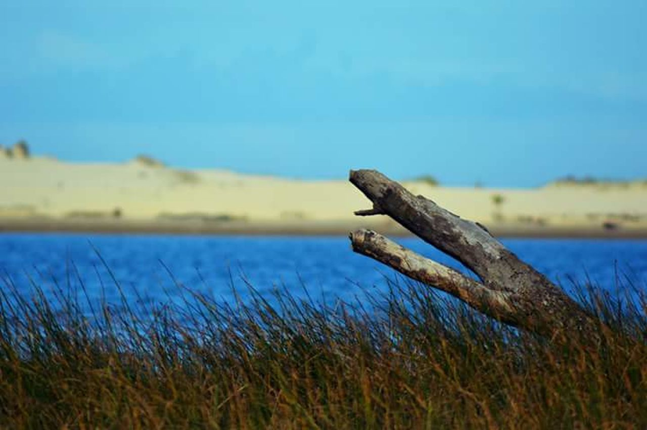 focus on foreground, grass, no people, day, outdoors, lake, blue, nature, close-up, water, rusty, one animal, reptile, animal themes, sky