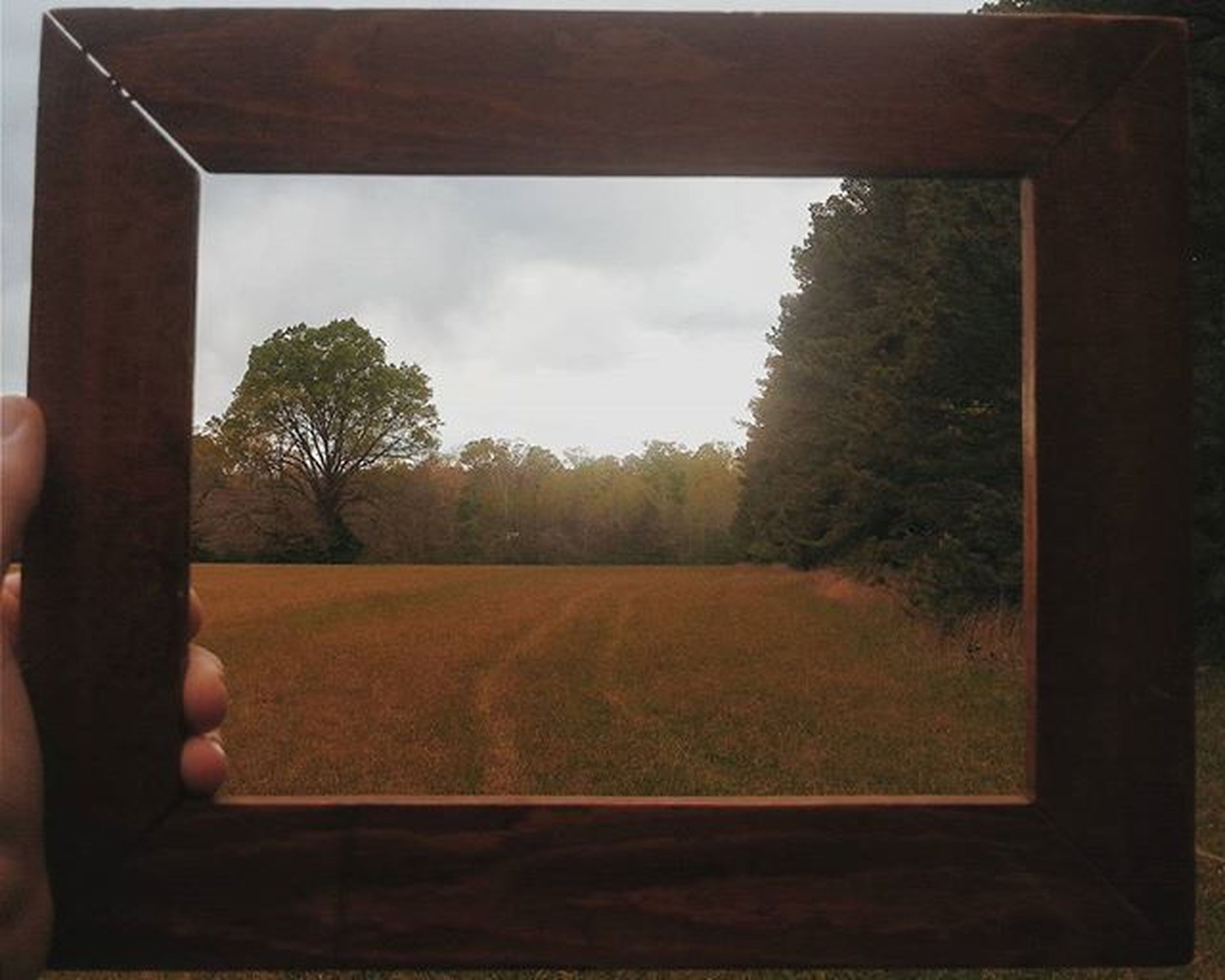 tree, sky, field, landscape, grass, nature, tranquility, growth, tranquil scene, cloud - sky, day, indoors, cloud, beauty in nature, rural scene, lifestyles, unrecognizable person, scenics