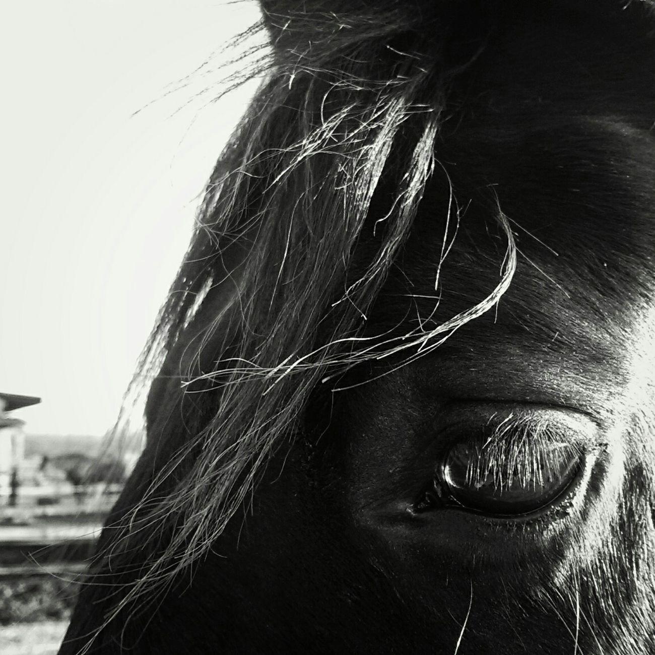 Pferd Pferde Pferd<3