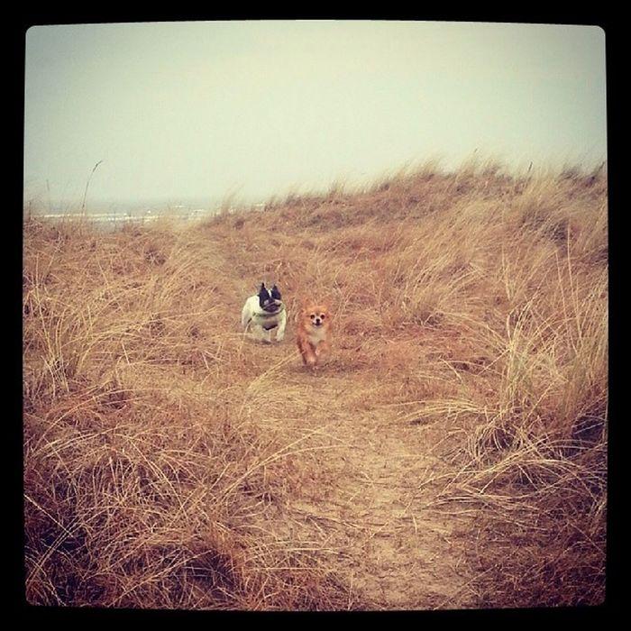 """""""Vänta på oss! :-0 vi kom inte upp för sandbanken lika snabbt som du och Chippo!"""" Speedygonzales"""