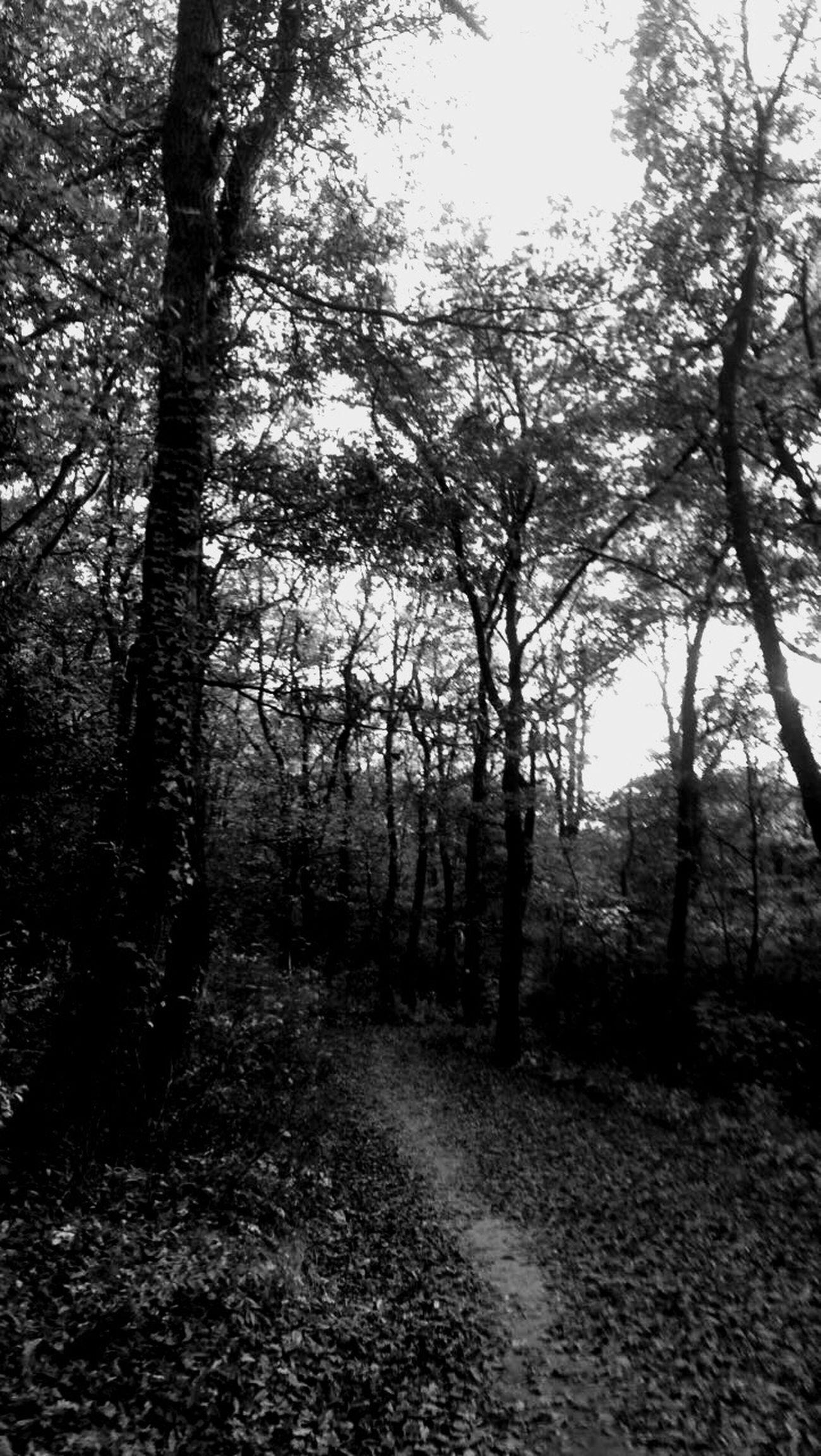 Originalpicture Nature Tree WoodLand Forest No People Woods Blackandwhite Shadow Yeah!