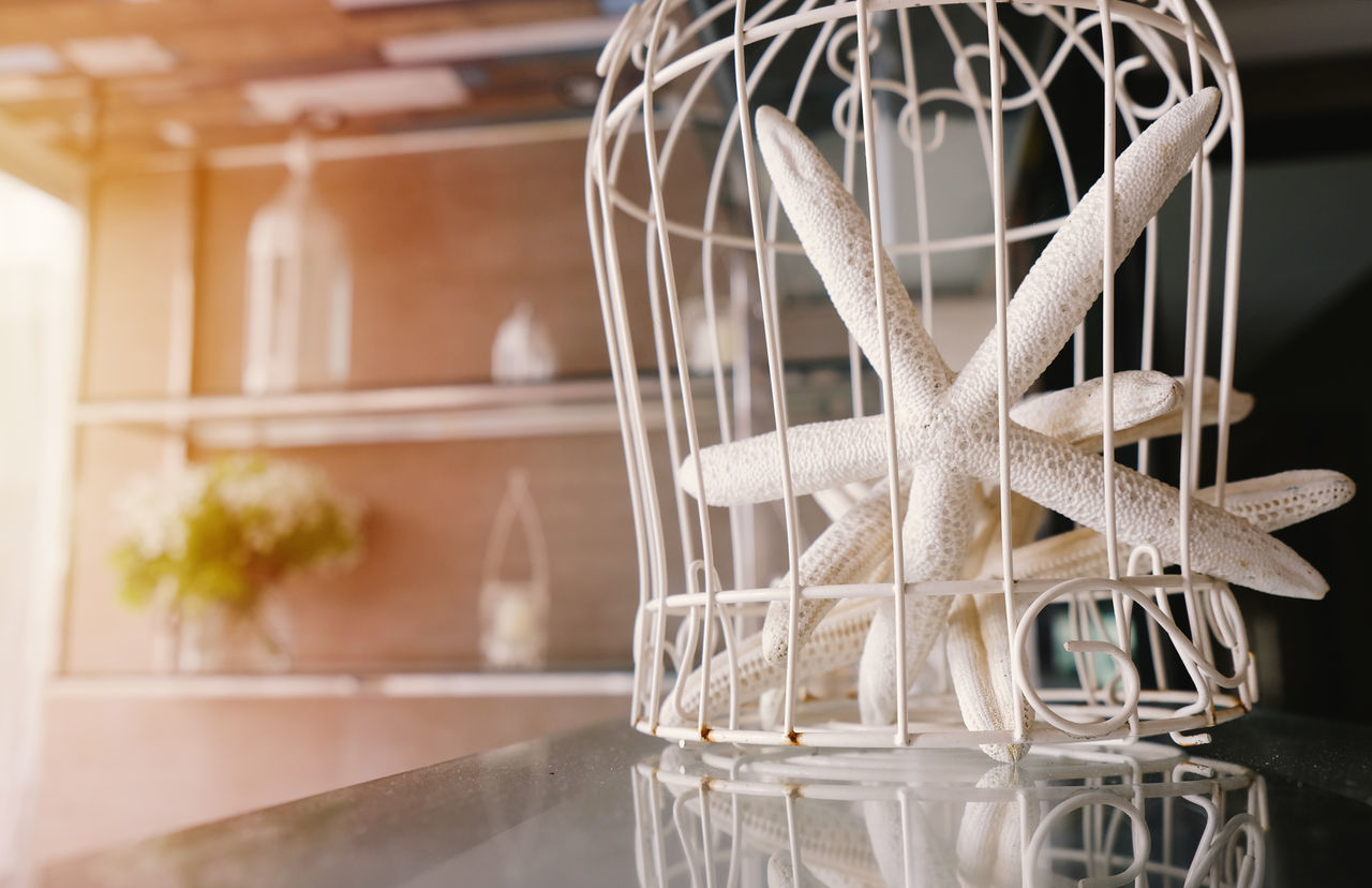 Cage Chic Close-up Contemporary Day Decor Decoration Design House Indoors  Interior Marine Nautical No People Object Room Starfish  Style Summer Table