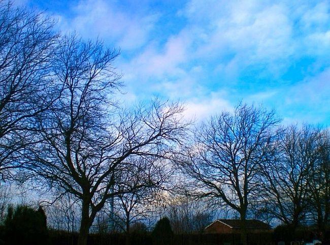 Spring Bare Tree Blue Sky Clouds And Sky