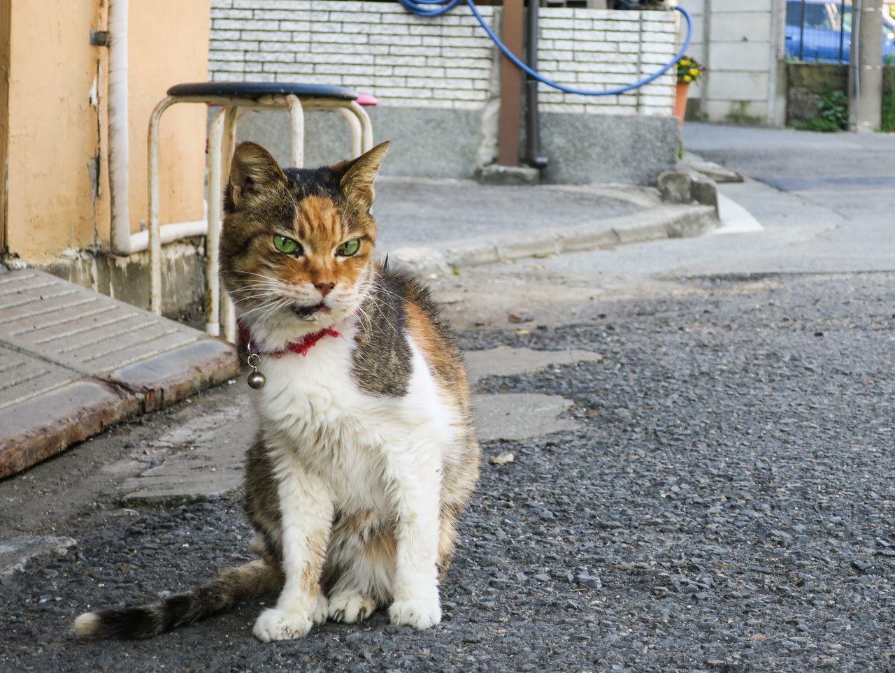 Beautiful stock photos of lustige tiere, Animal Themes, Carnivora, Cat, Day