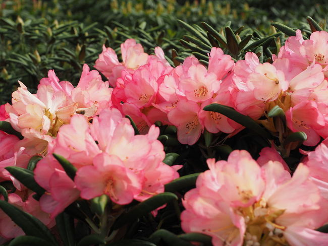Beauty In Nature Close-up Flower Fragility Freshness Growth Petal Pink Color Plant