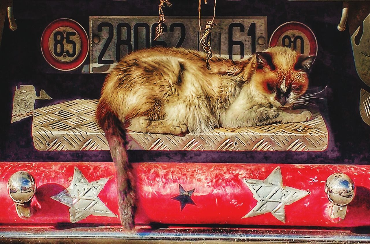 domestic cat, pets, domestic animals, animal themes, mammal, feline, no people, day, outdoors, close-up