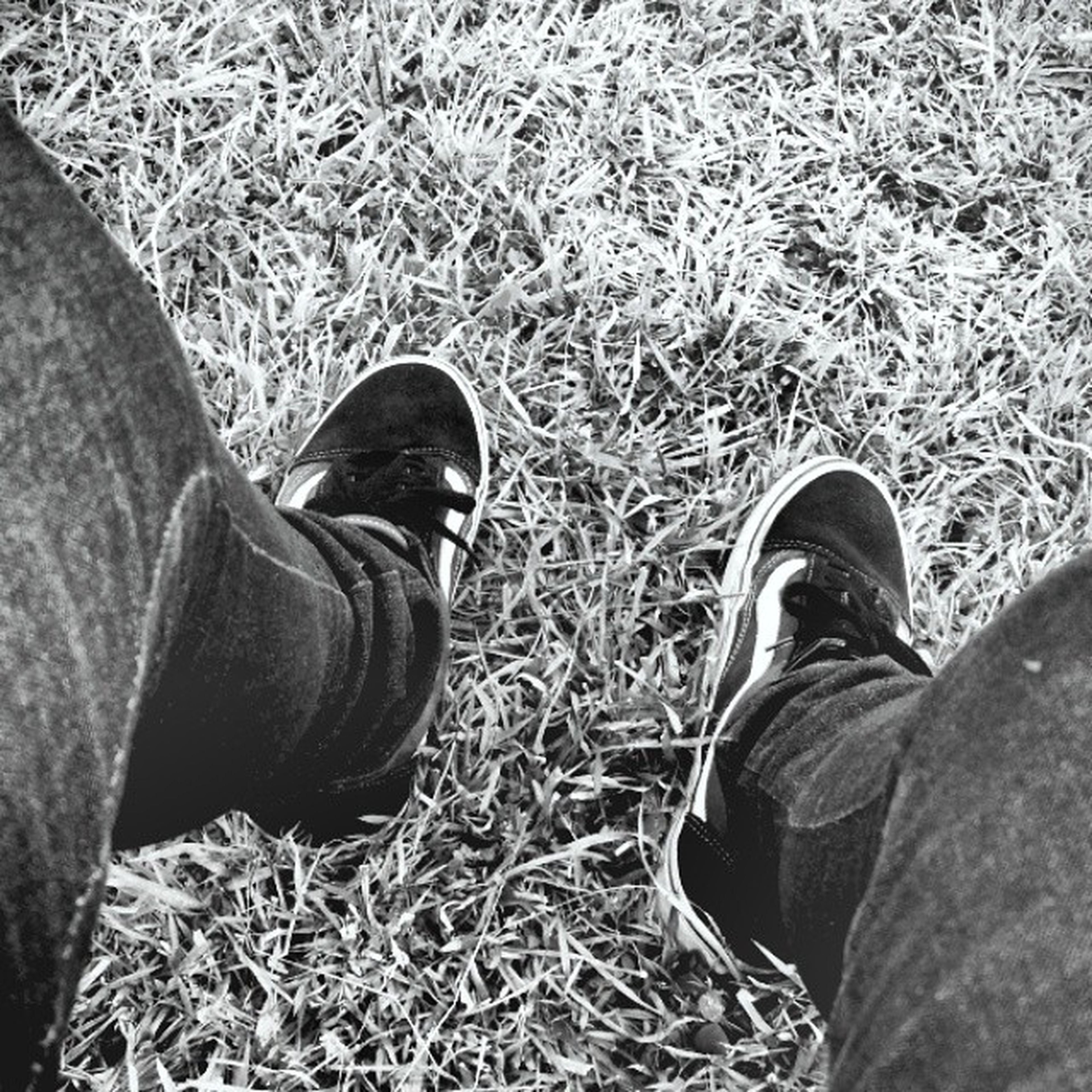 shoe, low section, person, footwear, personal perspective, jeans, grass, high angle view, human foot, lifestyles, standing, field, men, canvas shoe, pair, grassy, leisure activity