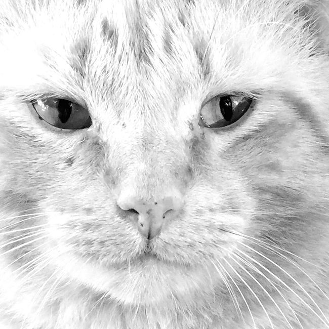 This very old stray cat has adopted me and now spends his days sleeping on my doorstep. Nature On Your Doorstep Cat Open Edit EyeEm Best Shots Blackandwhite Eye4photography  Black & White IPhoneography Black And White Pet Cats Of EyeEm Animals