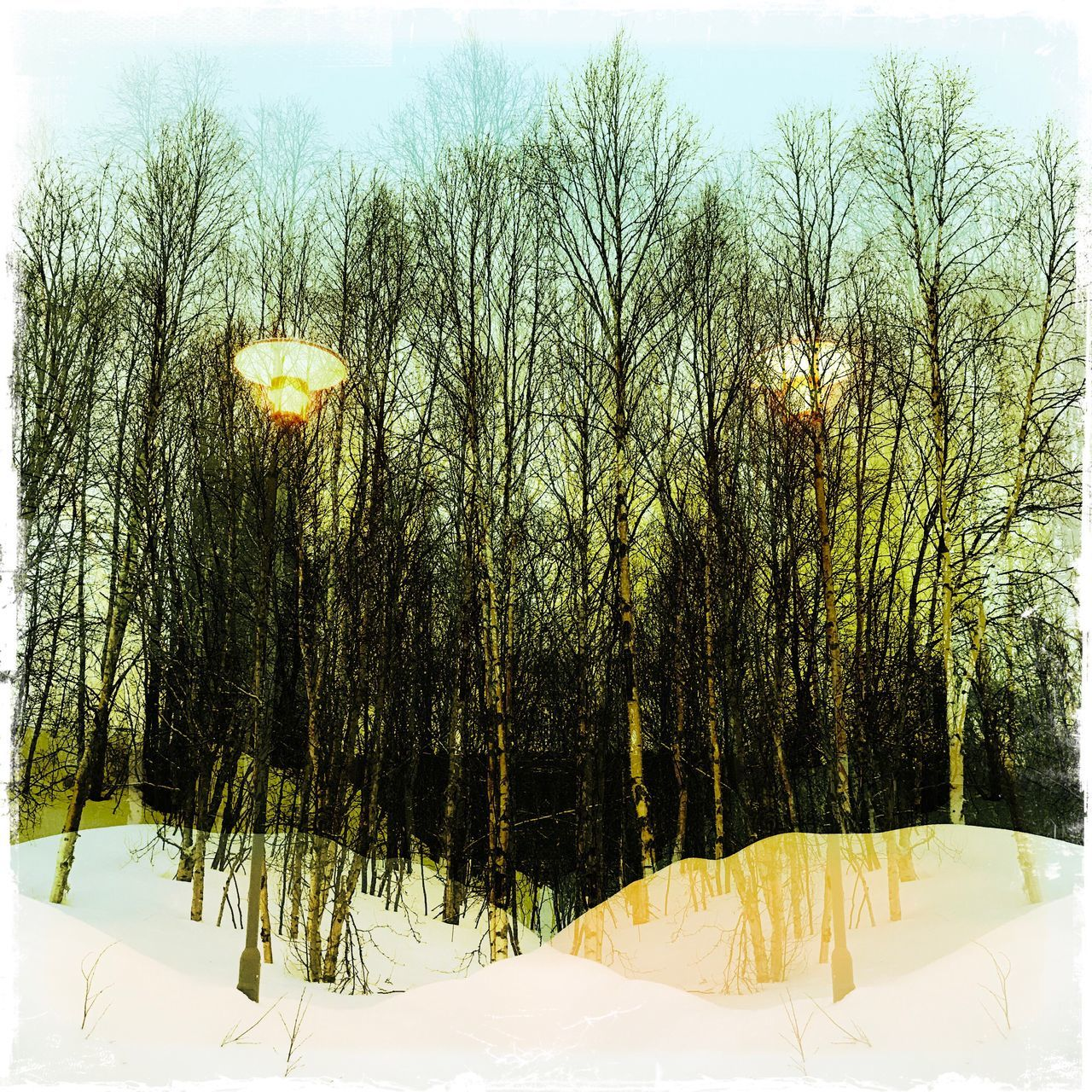 Adapted To The City Snow Winter Tree Cold Temperature Nature Beauty In Nature No People Landscape Growth Bare Tree Narnia  Otherworldly Polar Night Norway Double Exposure Magic Streetlights Birch Tree Light Contrast Border Borderline Parallel Best EyeEm Shot