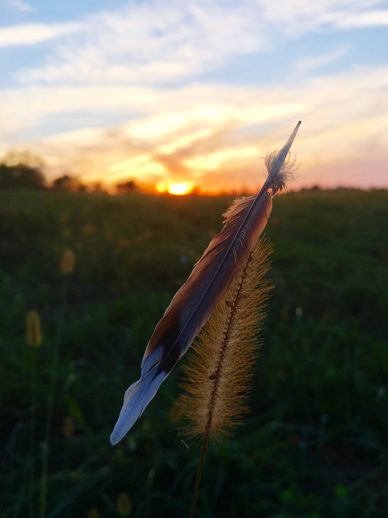 Sunset Nature One Animal Focus On Foreground Close-up Sky No People Field Outdoors Beauty In Nature Animal Themes Bird Animals In The Wild Fragility Day Naturelovers Nature_collection Nature_perfection Outdoor Photography Nature Photography Beauty In Nature Grass Sunset_collection Sun Feather