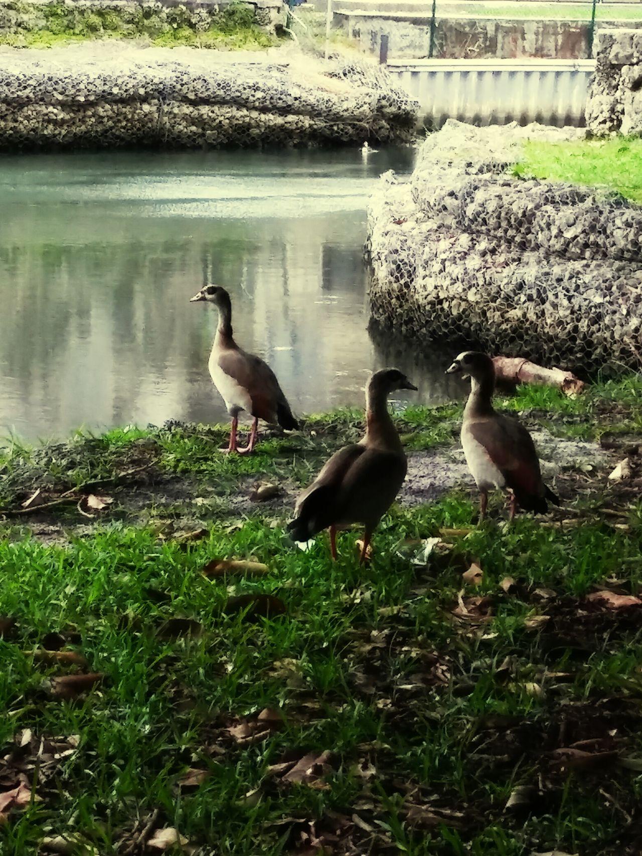 Bird Photography Canals And Waterways Taking Photos Natur!! Girlskick