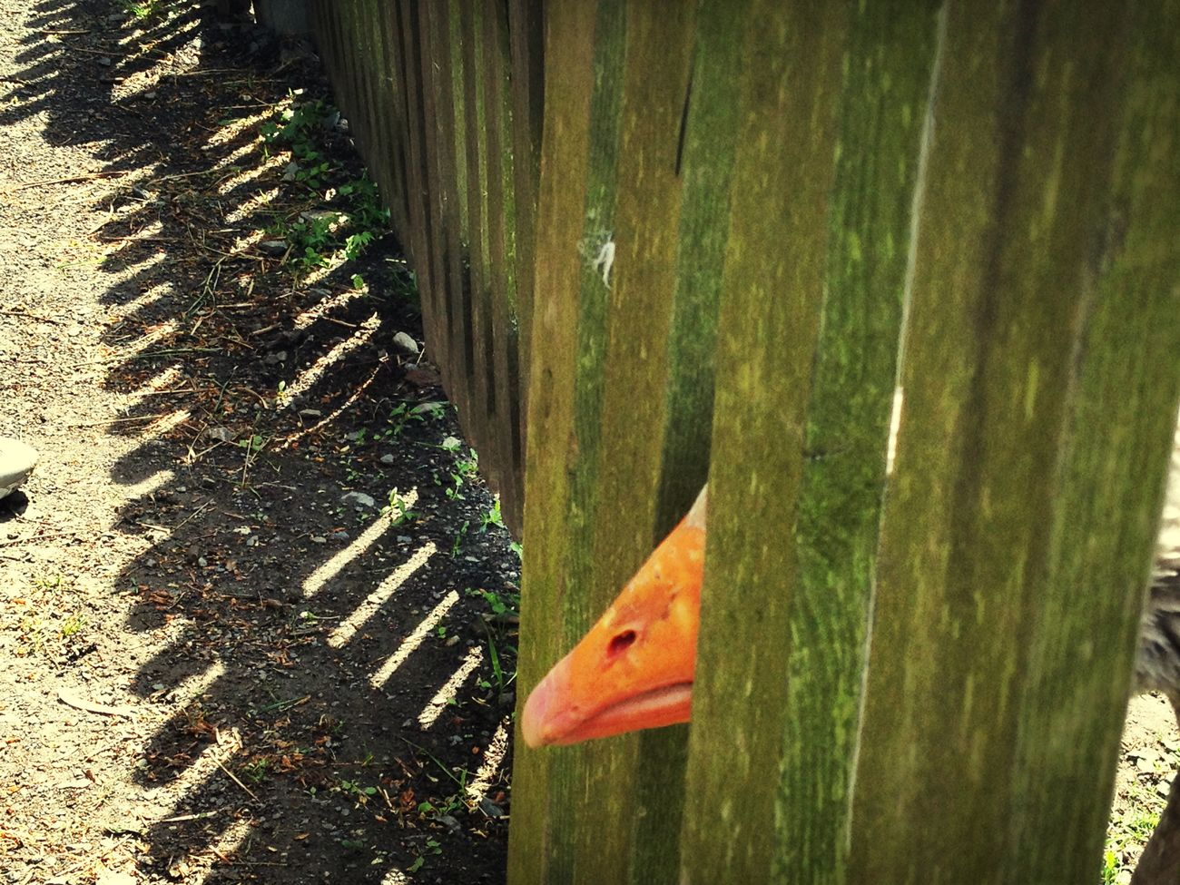 Duck The Explorer - 2014 EyeEm Awards Orange By Motorola