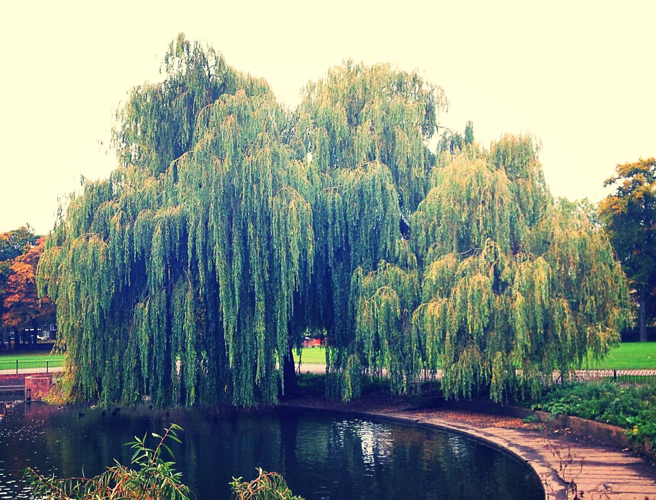 Willow Trees Lake Nature EyeEm Nature Lover Water Parks Park