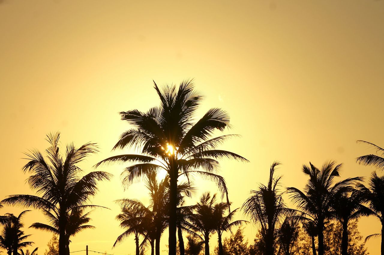 Coconut Tree Silhouette Exceptional Photographs Patterns In Nature Pattern, Texture, Shape And Form Minimalism Broken Patterns Copy Space Summer Time  Summer Sunset Sunset Growth Nature Silhouette Sky Tree Palm Tree Beauty In Nature Close-up No People Tranquility Outdoors Backgrounds Day Vacations