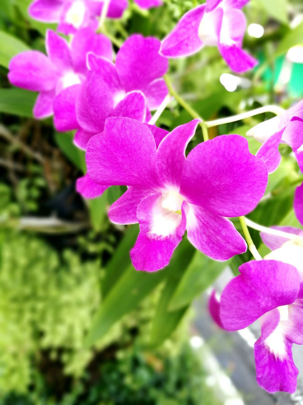 Orchids. Naturephotography Orchids Collection Orchidslover Orchids Garden Orchids Orchid Blossoms Orchid Flower