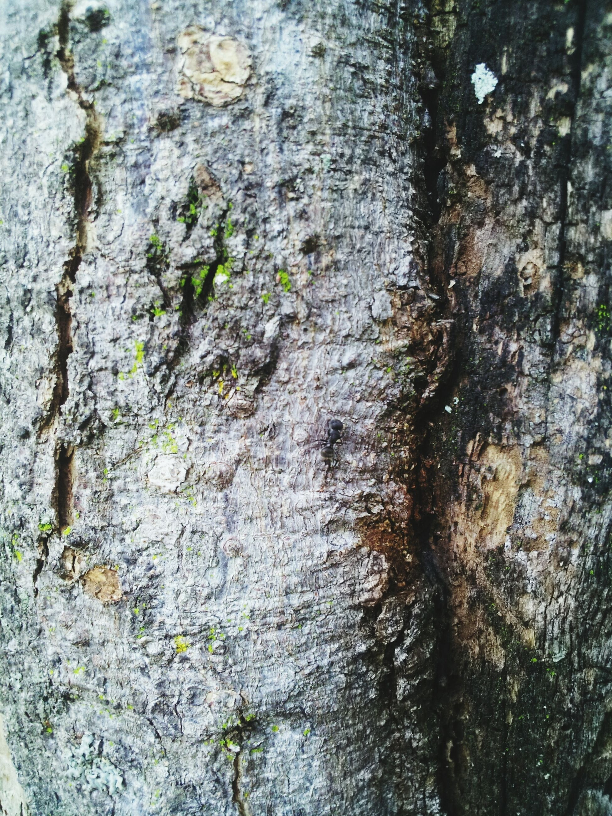 textured, full frame, rough, backgrounds, tree trunk, weathered, close-up, wall - building feature, tree, bark, no people, day, pattern, outdoors, nature, wall, growth, old, cracked, detail