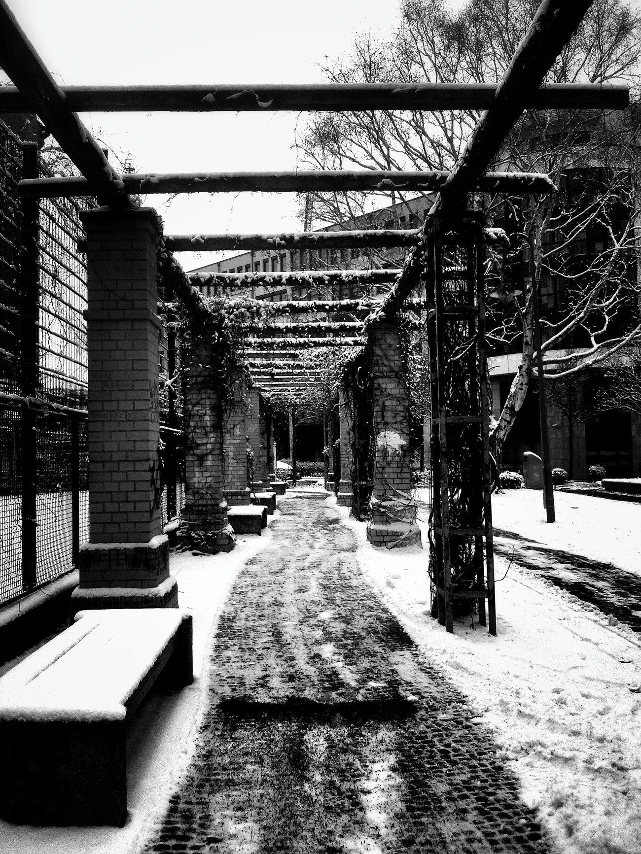 Secret garden Snow Tunnel Path Black And White Showcase: January