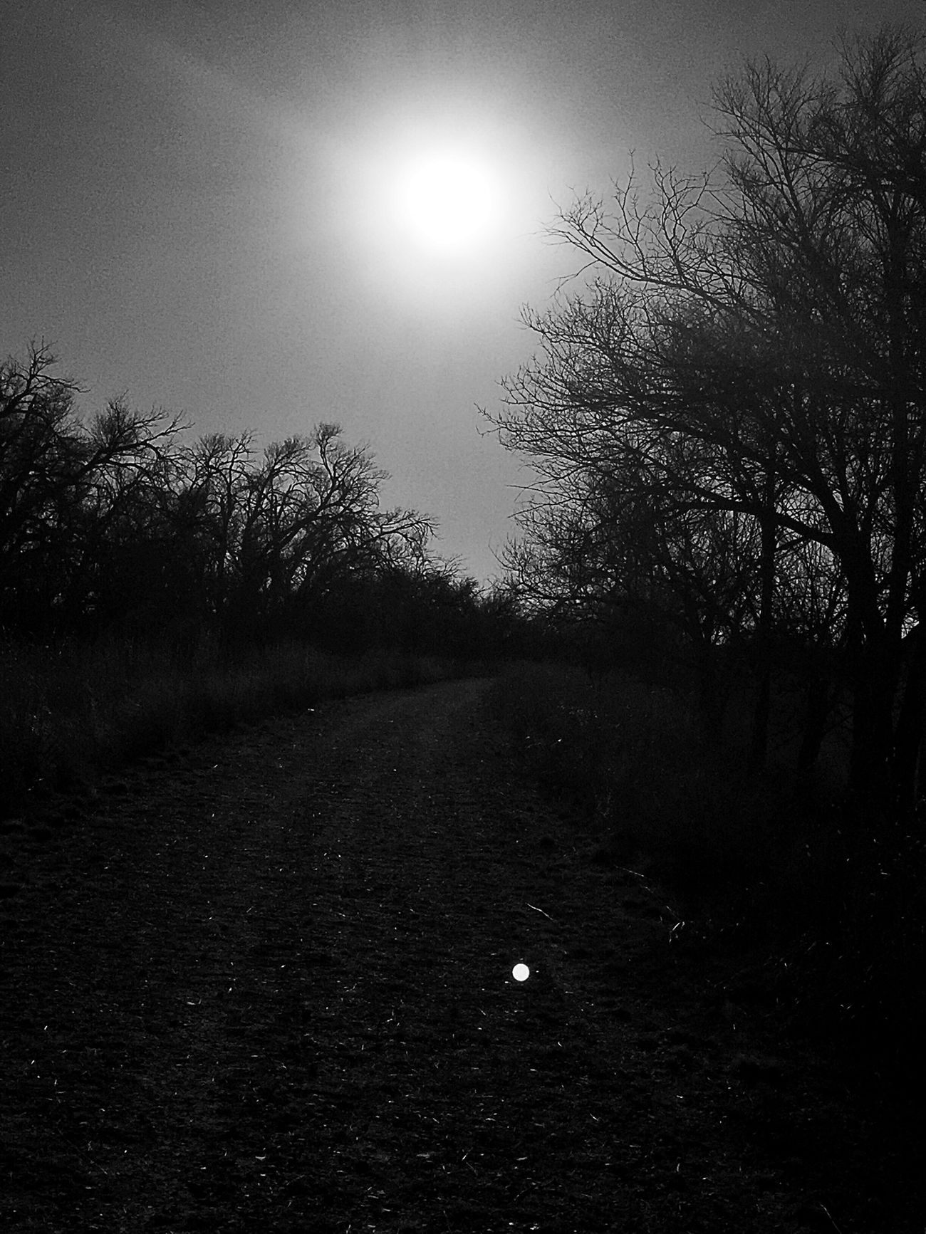 http://youtu.be/cZmTtjKOq8E Fortheloveofblackandwhite Mood And Music Bnw_collection Eye4photography  EyeEm Nature Lover Naturelovers Landscape_Collection Texas Panhandle Tadaa Community EyeEm Untold Stories Buffalo Lake Wildlife Refuge Texas Landscape Chasing The Sun We Own The Light Darkness And Light Treehugging Silhouette Light And Love Always