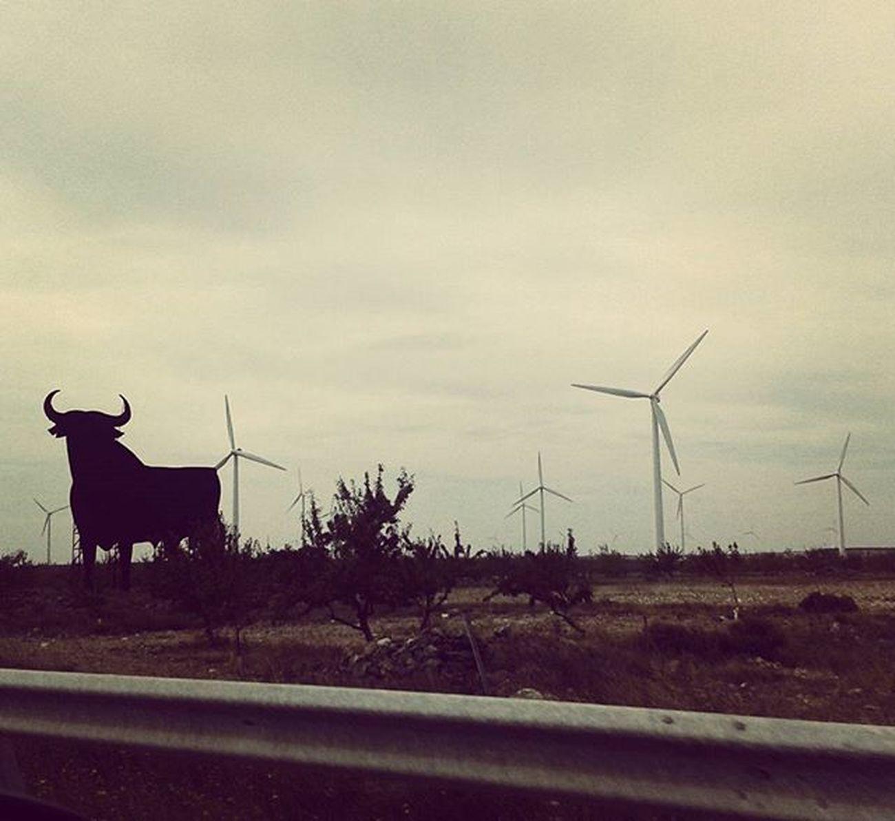 In the same lanscape. The world needs more Windmills & less artificial bulls. Let's say no to Bullfighting & yes to the Ethical Treatment of Animals Sendbacksaturday Toros Corrida Noalacorridadetoros Isf Isfoundation @iansomerhalder @iamnikkireed Sustainability Compassion Ecology Ecosystem  Earth Sustainableenergy Medioambiente SPAIN España Osborne Vino Vinoosborne Torodeosborne