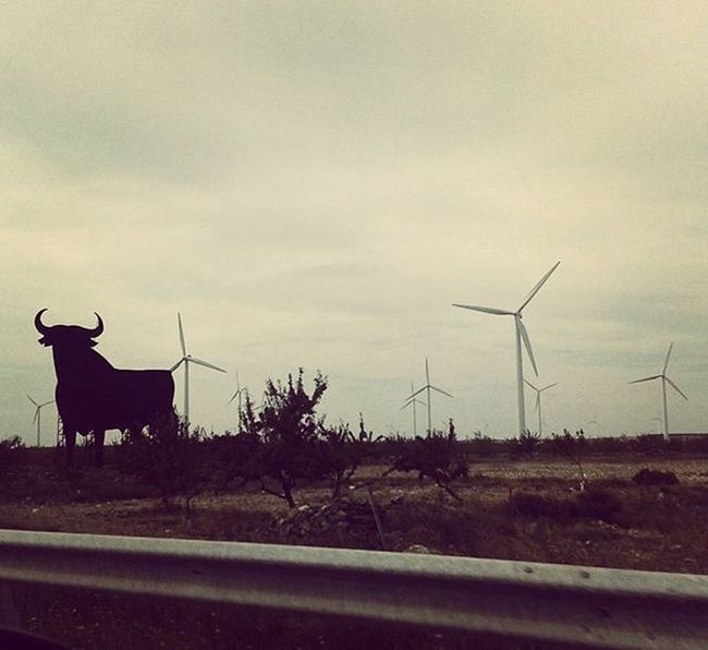 In the same lanscape. The world needs more Windmills & less artificial bulls. Let's say no to Bullfighting & yes to the Ethical Treatment of Animals Sendbacksaturday Toros Corrida Noalacorridadetoros Isf Isfoundation @iansomerhalder @iamnikkireed Sustainability Compassion Ecology Ecosystem  Earth Sustainableenergy Medioambiente SPAIN España Osborne Vino Vinoosborne Torodeosborne