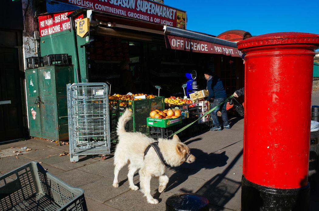 Cart City City Dog Leash Life Light Market No People Off Licence Ordinary  Ordinary Scene Outdoor Pavement Pets Post Box  Post Mail Urban