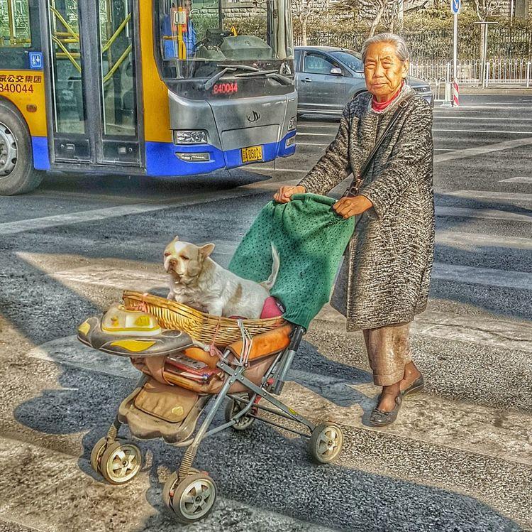 Companion Dog Grandma Grandmother Dog Love Grandma Love  Baby Carriage Pram Stroller Love Companion Dog❤ Buddy True Love First Eyeem Photo The Street Photographer - 2016 EyeEm Awards The Traveler-2016 Awards The Portraitist - 2016 EyeEm Awards My Commute