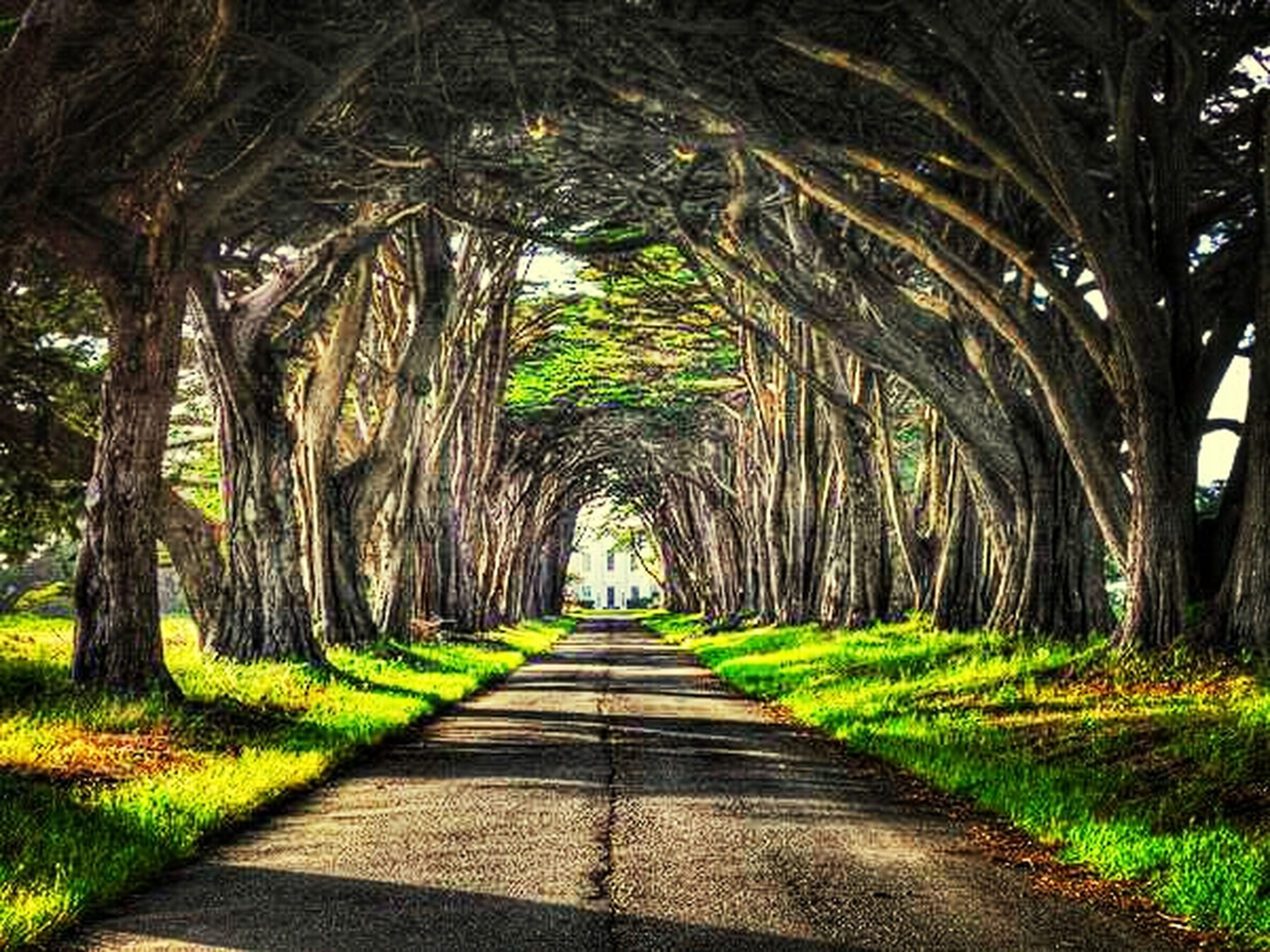 the way forward, tree, diminishing perspective, green color, vanishing point, growth, footpath, grass, tranquility, nature, tree trunk, walkway, treelined, pathway, park - man made space, narrow, branch, long, sunlight, tranquil scene