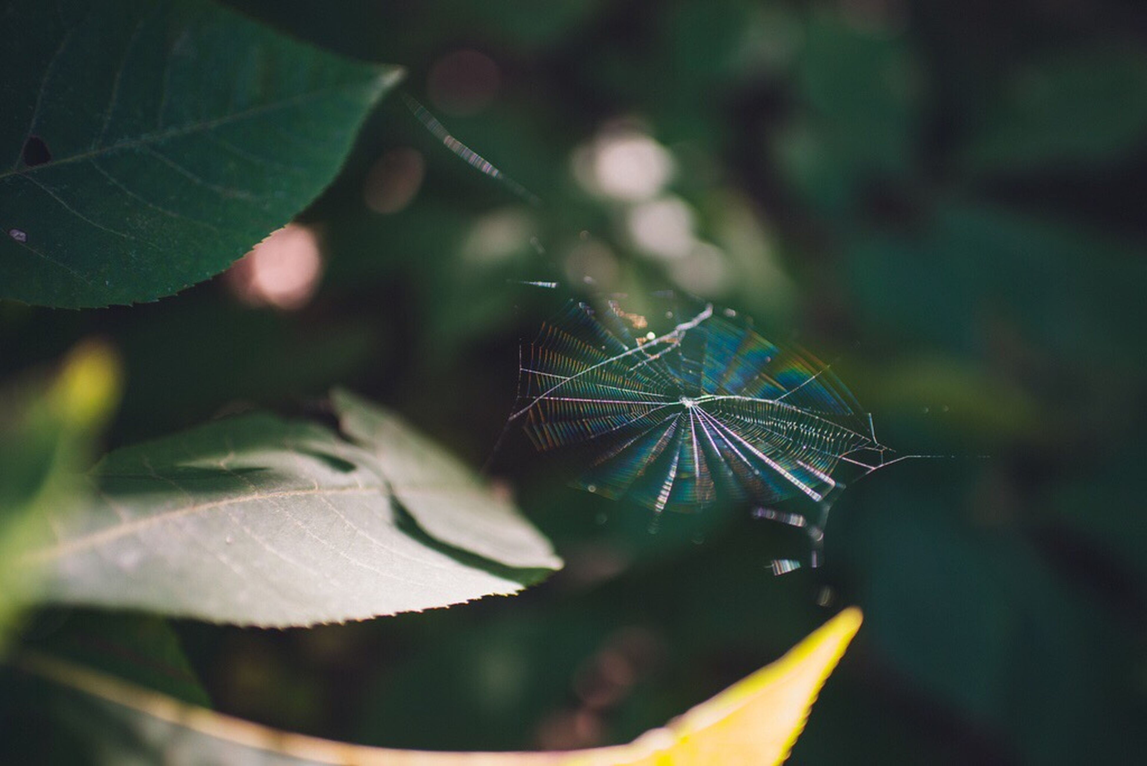 leaf, close-up, growth, nature, selective focus, plant, beauty in nature, fragility, leaf vein, green color, botany, tranquility, focus on foreground, freshness, day, leaves, new life, outdoors, green, scenics, softness, springtime, garden, growing