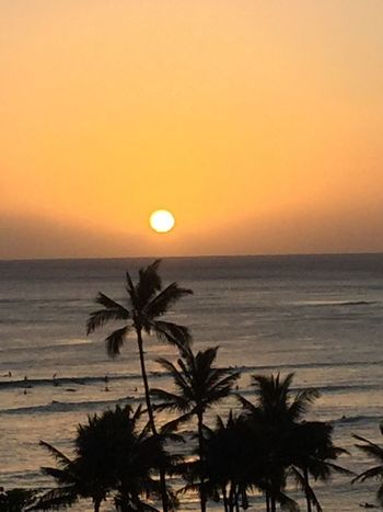 Sunset Sun Horizon Over Water Orange Color Sky Palm Tree Silhouette No People Yellow Color Ocean No Edit/no Filter Oahu Hawaii Oahu, Hawaii Island Of Oahu, Hawaii Oahu Oahu Sunset Oahu / Hawaii An Eye For Travel