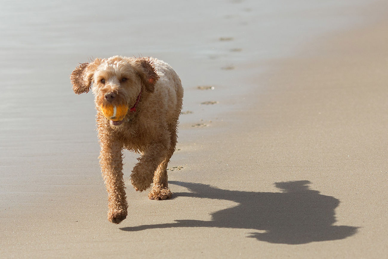Dog running along the beach at Branksome this lunchtime. Poole Beach Photography Dog Walking Light And Shadow