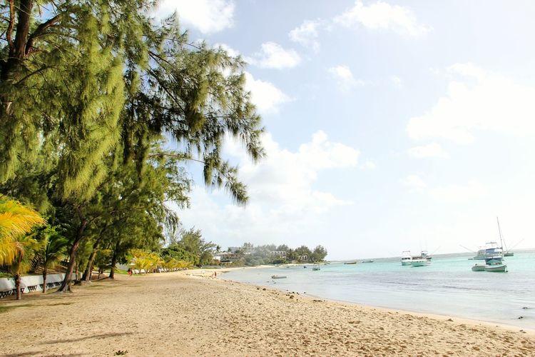 Mauritius Beach Beach Sea Sand Tree Sky Nature Water Vacations Beauty In Nature Travel Destinations Mauritius 🇲🇺 Island
