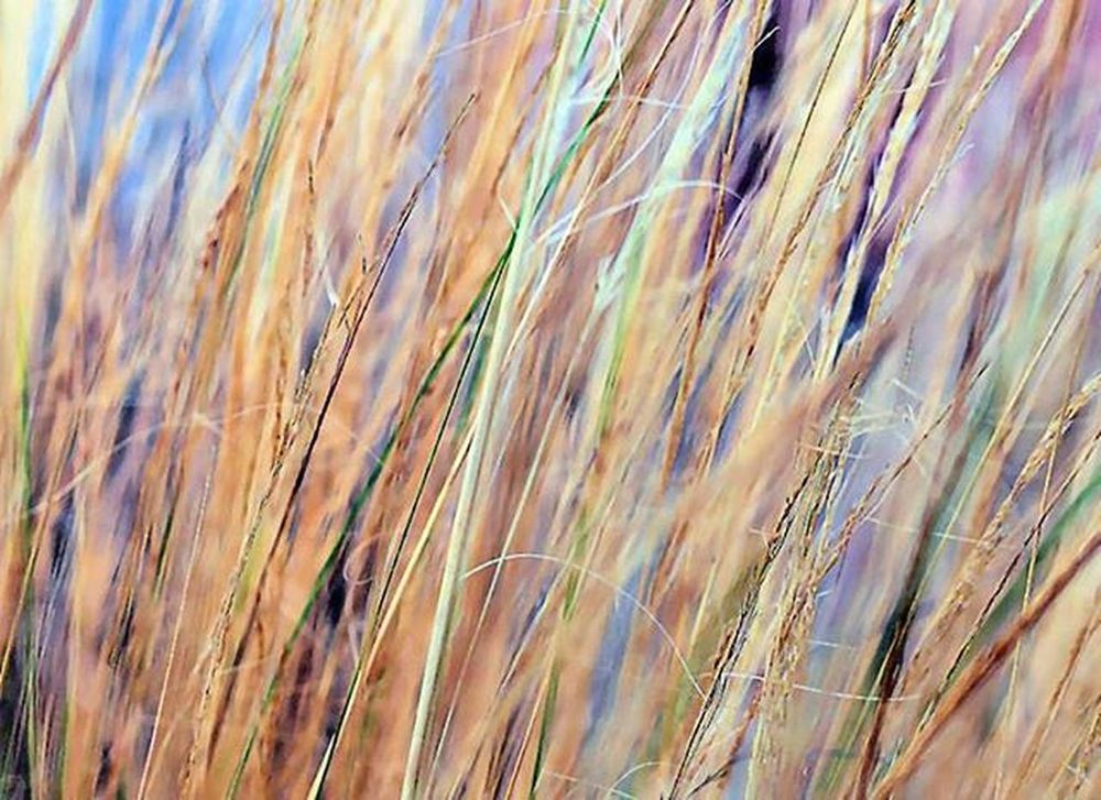 This is a kind of Ornamentalgrass The grass was grown in a large pot and I talked to the owner about how interesting it is. He said that this is perfect for autumn. Ms_swuc_autumn challenge autumn macro shot Question to everyone, since this landscape picture is better to be shown larger - what if I post landscape picture in portait so you look at it by rotationg your mobile phone 90 degree ? yes / no ? 3) Tv_depthoffield 4) Loves_united_macro 5) Fotofanatics_nature_ 6) Small_world_upclose 7) Splendid_dof 8) Nature_sultans 9) Tgif_nature 0) Nature_brilliance 1) Resourcemag 2) Macro_club 3) Macro_spotlight 4) Pocket_family 5) Ig_shotz 6) Jj_indetail 7) Best_photogram 8) 9vaga_shabbysoft9 9) 1001macro 0) Bns_macro 1) Best_macro 2) Photoflair_macro 3) Igbest_macros 4) Macro_mood 5) Macro_holic 6) macro_sultans 7) my_daily_macro 8) macro_secrets 9) macroclique 0) 500px