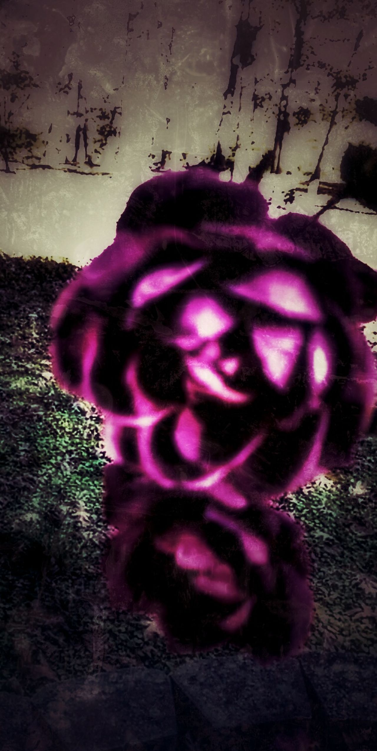 """https://youtu.be/lLRU82vMpcQ """"Turn Off the Tides Under the Norhern Lights"""" The Impurist Kiss From A Rose Fragility Flowerporn Abstract Beauty In Nature Darkness And Life Vintage Eyes We Are Nature Home Tree Home Musical Photos Lyricalartistry Asaf Avidan"""