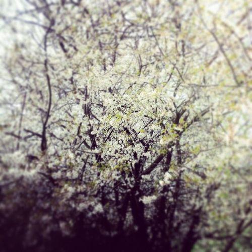 Kingsheathpark Beauty Trees Springwalk Spring2014 Strolling Parks Nature Birmingham