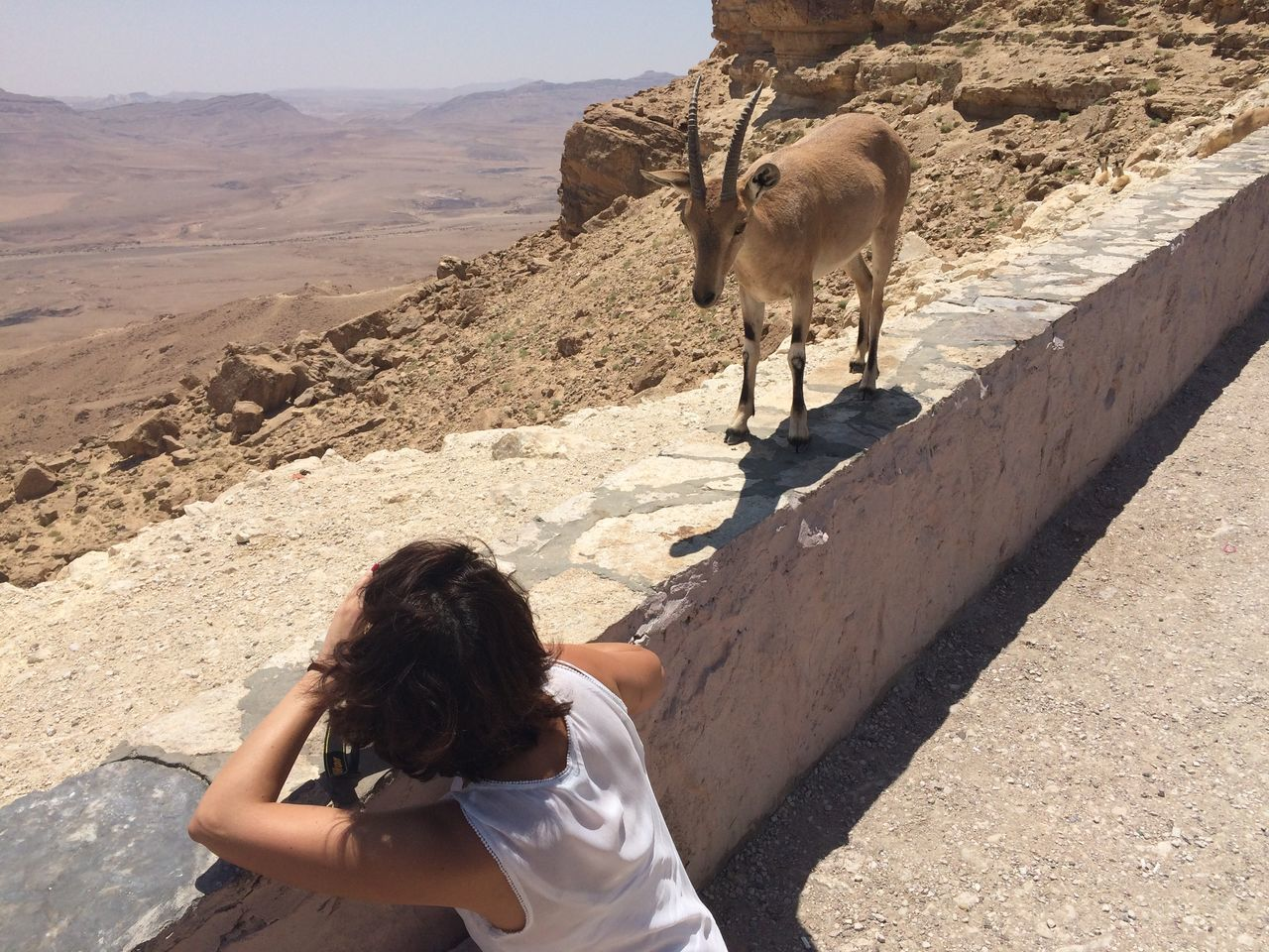Animal Themes Animal Wildlife Animals In The Wild Arid Climate Beauty In Nature Deer Desert Desert Desert Beauty Domestic Animals Gazelle Landscape Looking At Camera Mammal Mountain Range Nature One Person Outdoors People Rear View Stag Taking Photos Travel Travel Destinations Young Women