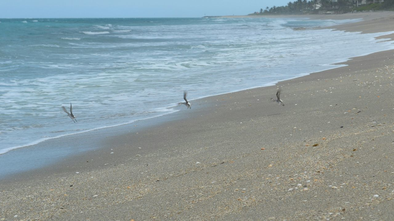sandpipers in flight Sandpipers Beach Birdsinflight Small And Swift Waves, Ocean, Nature Oceanscape Seaside Shoreline Deceptively Simple
